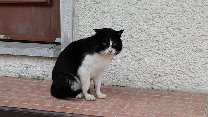 コスタノヴァ 猫